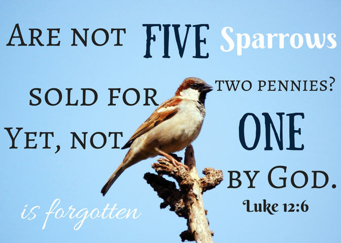Luke 12-6 scripture card